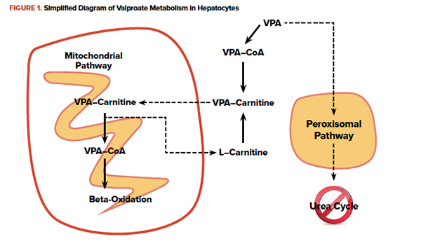 Figure 1. Valproate metabolism in hepatocytes